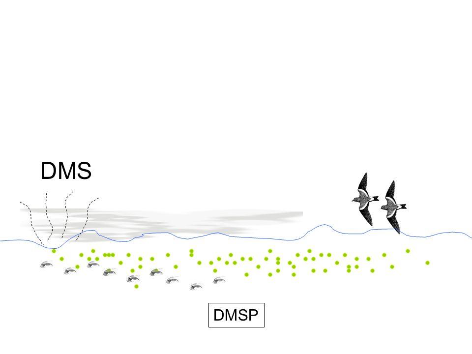 DMS DMSP