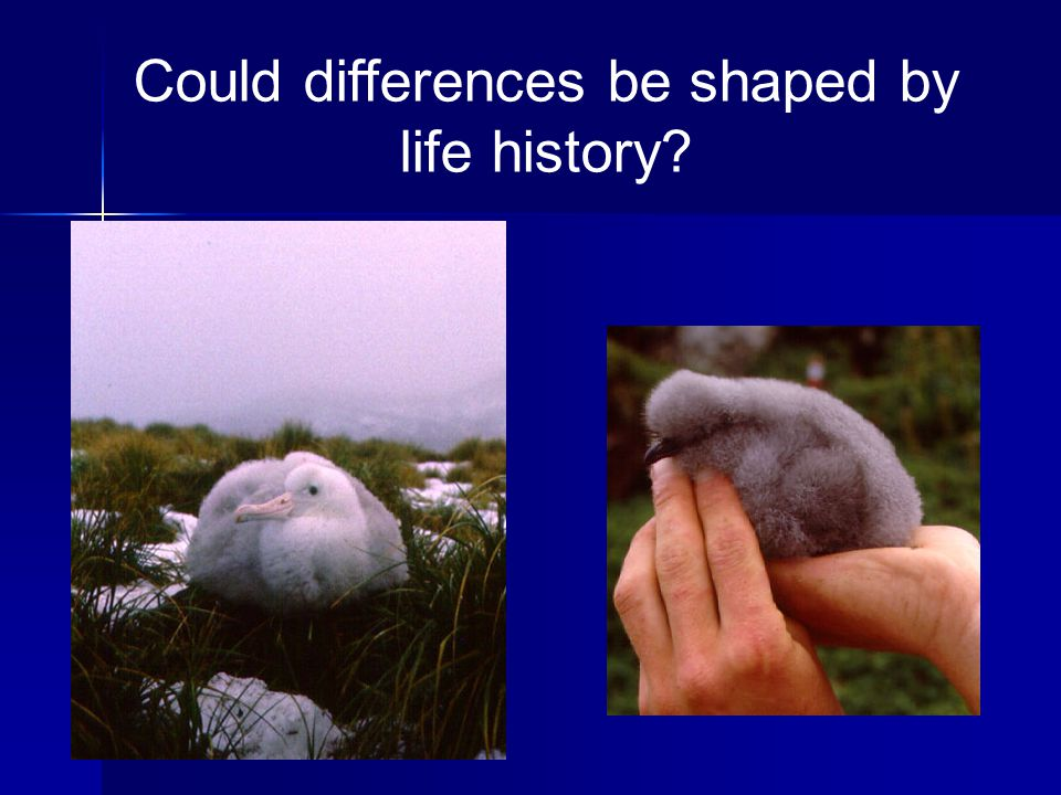 Could differences be shaped by life history