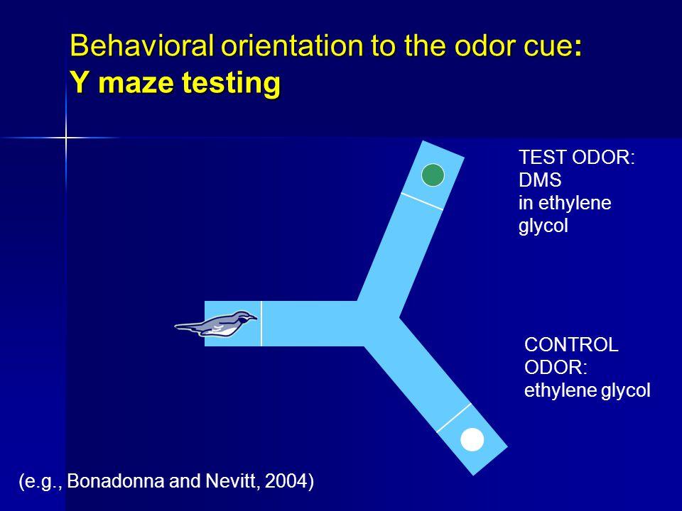 Behavioral orientation to the odor cue: Y maze testing TEST ODOR: DMS in ethylene glycol CONTROL ODOR: ethylene glycol (e.g., Bonadonna and Nevitt, 2004)