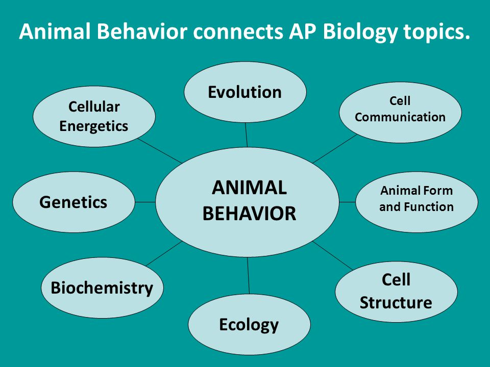 Animal Behavior connects AP Biology topics.