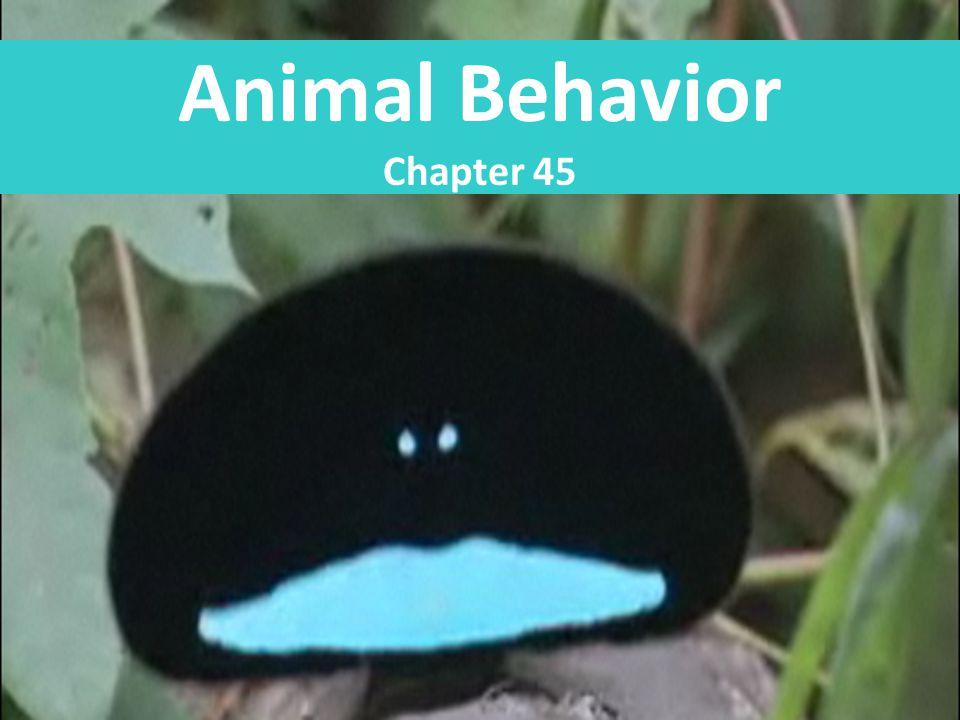 Animal Behavior Chapter 45