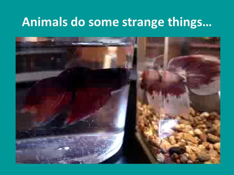 Animals do some strange things…