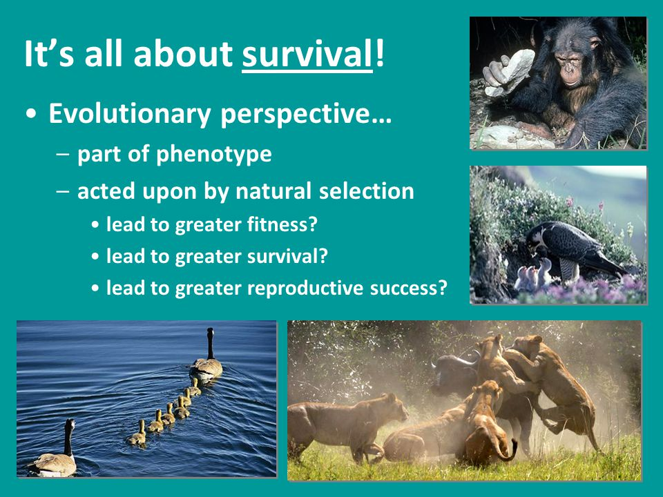 Animal Behavior How does the behavior increase survival.