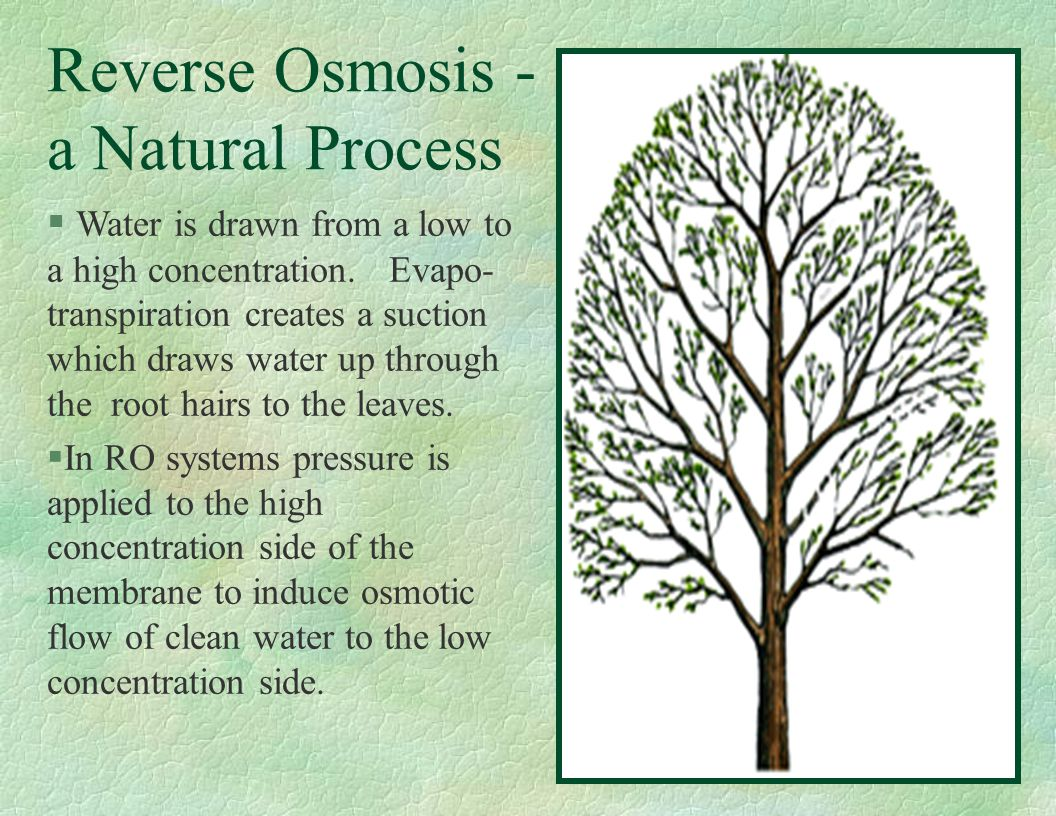 Reverse Osmosis - a Natural Process § Water is drawn from a low to a high concentration. Evapo- transpiration creates a suction which draws water up t