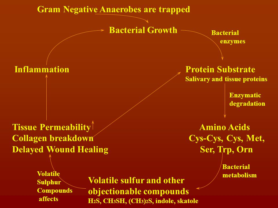 Gram Negative Anaerobes are trapped Bacterial Growth Protein Substrate Salivary and tissue proteins Bacterial enzymes Amino Acids Cys-Cys, Cys, Met, Ser, Trp, Orn Enzymatic degradation Volatile sulfur and other objectionable compounds H 2 S, CH 3 SH, (CH 3 ) 2 S, indole, skatole Bacterial metabolism Tissue Permeability Collagen breakdown Delayed Wound Healing Volatile Sulphur Compounds affects Inflammation