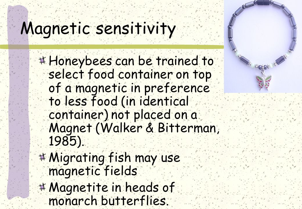 Magnetic sensitivity Honeybees can be trained to select food container on top of a magnetic in preference to less food (in identical container) not placed on a Magnet (Walker & Bitterman, 1985).