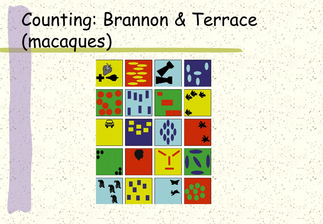 Counting: Brannon & Terrace (macaques)