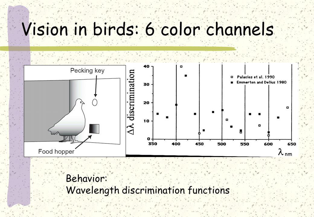 Vision in birds: 6 color channels Behavior: Wavelength discrimination functions