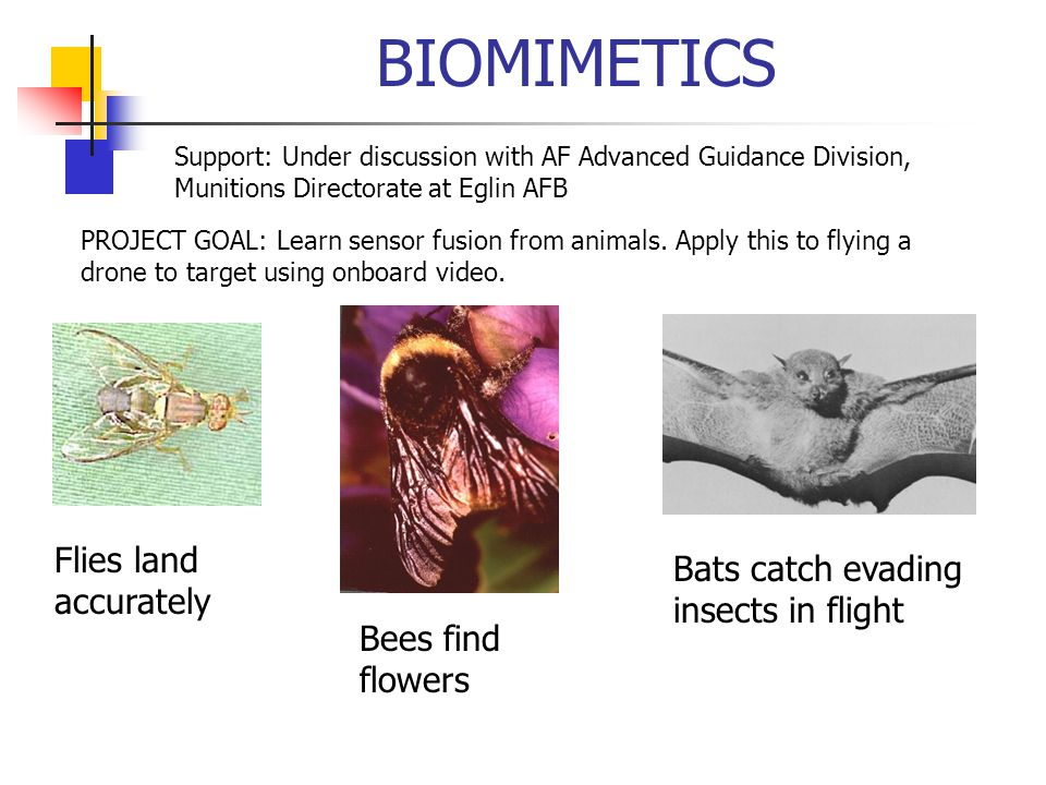 BIOMIMETICS Support: Under discussion with AF Advanced Guidance Division, Munitions Directorate at Eglin AFB PROJECT GOAL: Learn sensor fusion from animals.