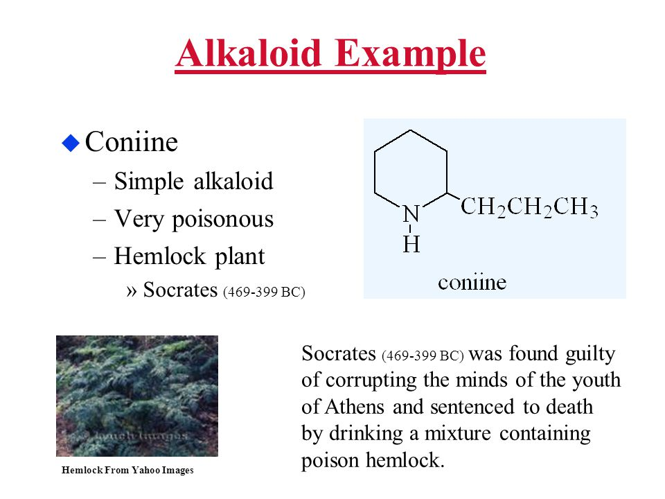 Alkaloid Example  Coniine –Simple alkaloid –Very poisonous –Hemlock plant »Socrates (469-399 BC) Hemlock From Yahoo Images Socrates (469-399 BC) was