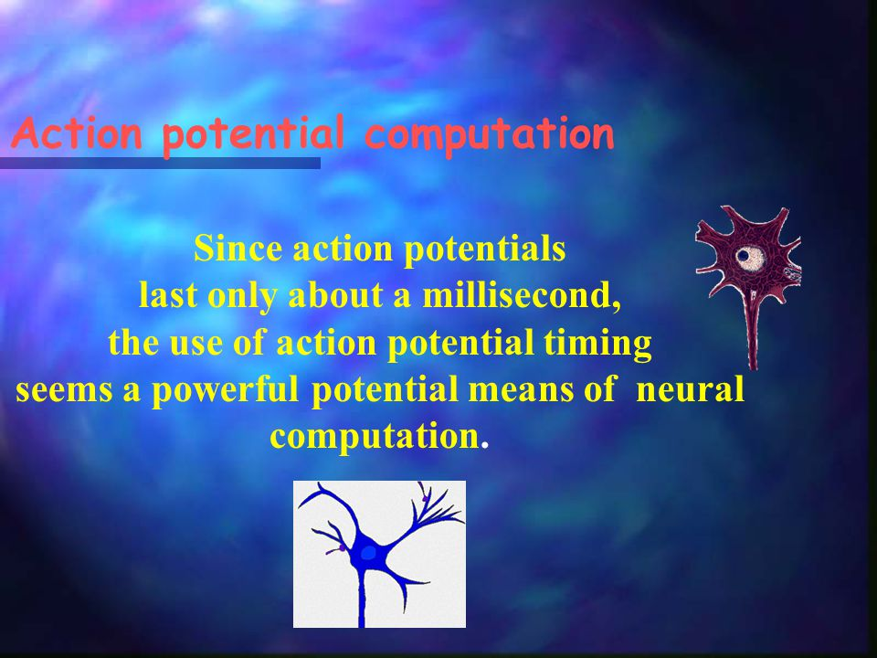 Action potential computation Since action potentials last only about a millisecond, the use of action potential timing seems a powerful potential means of neural computation.