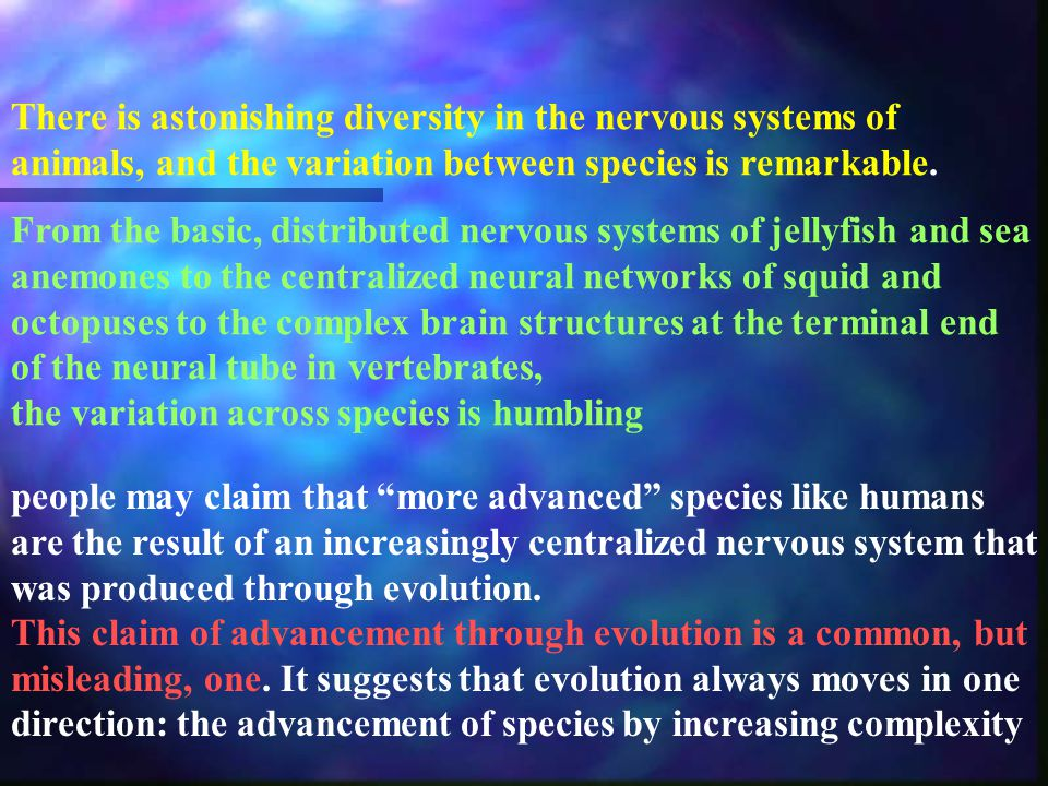 There is astonishing diversity in the nervous systems of animals, and the variation between species is remarkable.