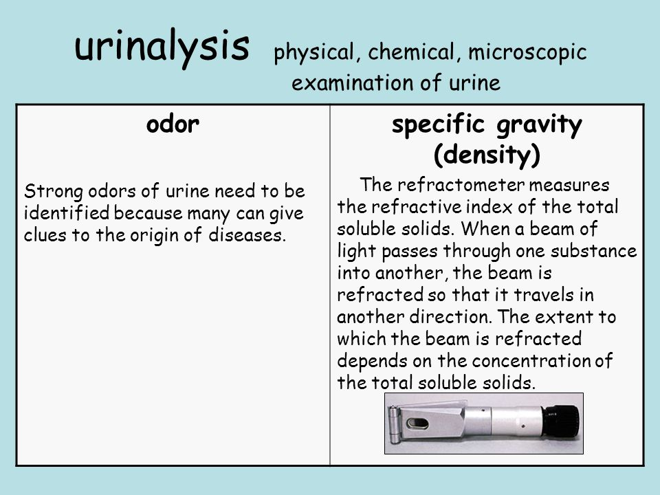 urinalysis physical, chemical, microscopic examination of urine odor Strong odors of urine need to be identified because many can give clues to the origin of diseases.