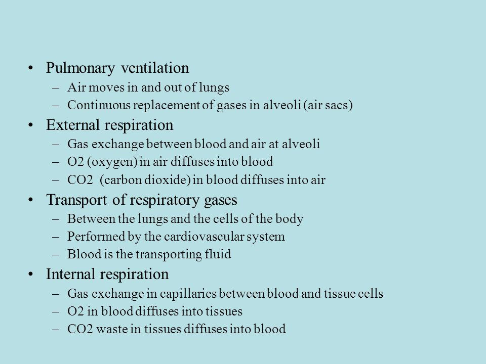 Pulmonary ventilation –Air moves in and out of lungs –Continuous replacement of gases in alveoli (air sacs) External respiration –Gas exchange between blood and air at alveoli –O2 (oxygen) in air diffuses into blood –CO2 (carbon dioxide) in blood diffuses into air Transport of respiratory gases –Between the lungs and the cells of the body –Performed by the cardiovascular system –Blood is the transporting fluid Internal respiration –Gas exchange in capillaries between blood and tissue cells –O2 in blood diffuses into tissues –CO2 waste in tissues diffuses into blood