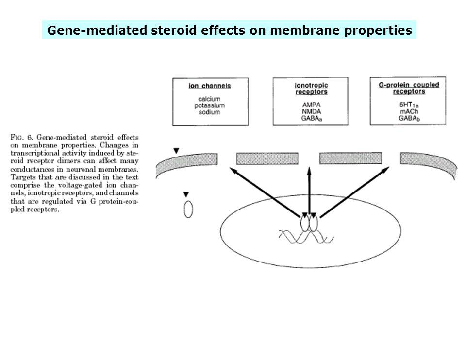 Gene-mediated steroid effects on membrane properties