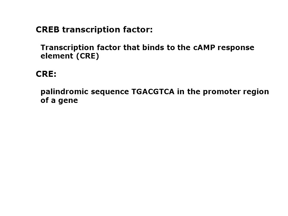 CREB transcription factor: Transcription factor that binds to the cAMP response element (CRE) CRE: palindromic sequence TGACGTCA in the promoter regio