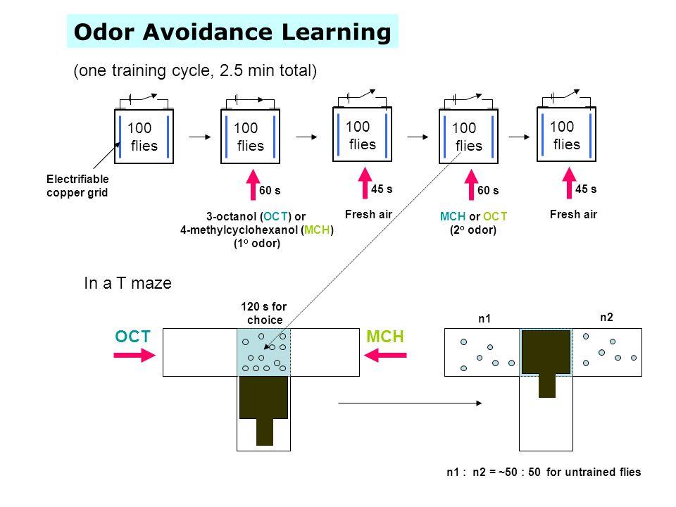 Odor Avoidance Learning 100 flies Electrifiable copper grid 100 flies 3-octanol (OCT) or 4-methylcyclohexanol (MCH) (1 o odor) 60 s 100 flies Fresh ai