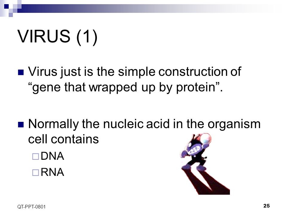 25 QT-PPT-0801 VIRUS (1) Virus just is the simple construction of gene that wrapped up by protein .