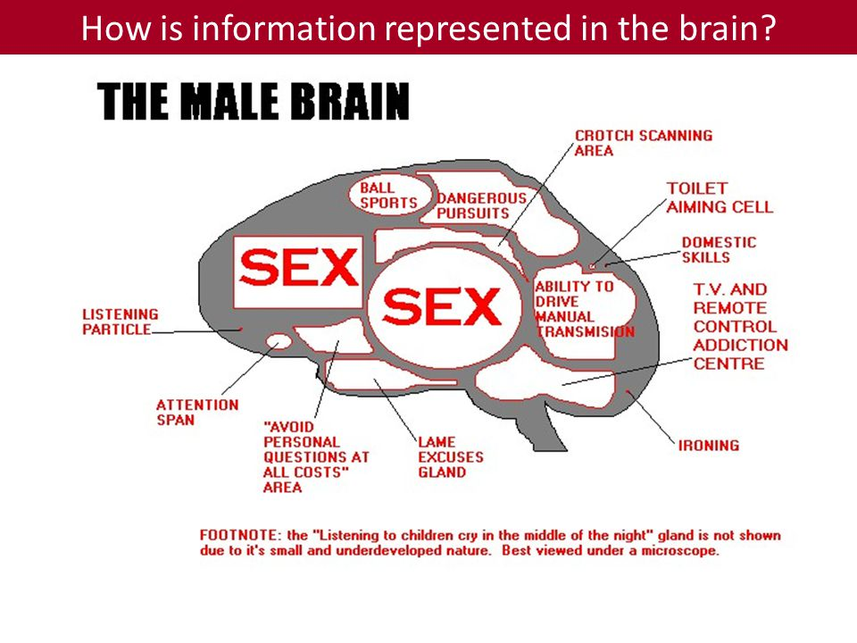 How is information represented in the brain
