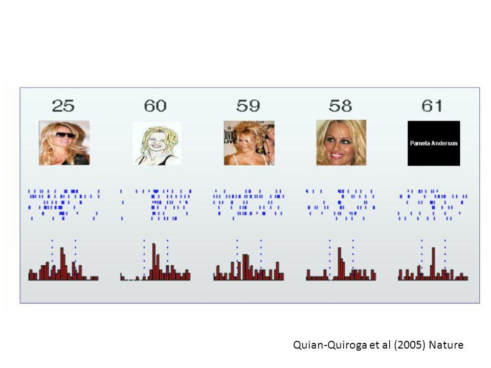 Quian-Quiroga et al (2005) Nature
