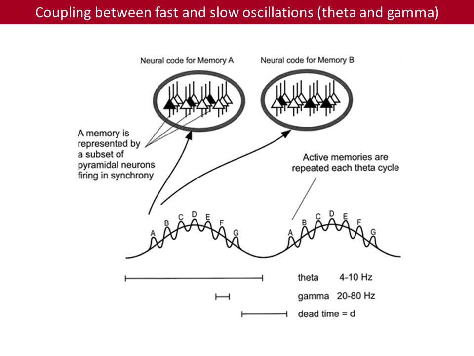 Coupling between fast and slow oscillations (theta and gamma)