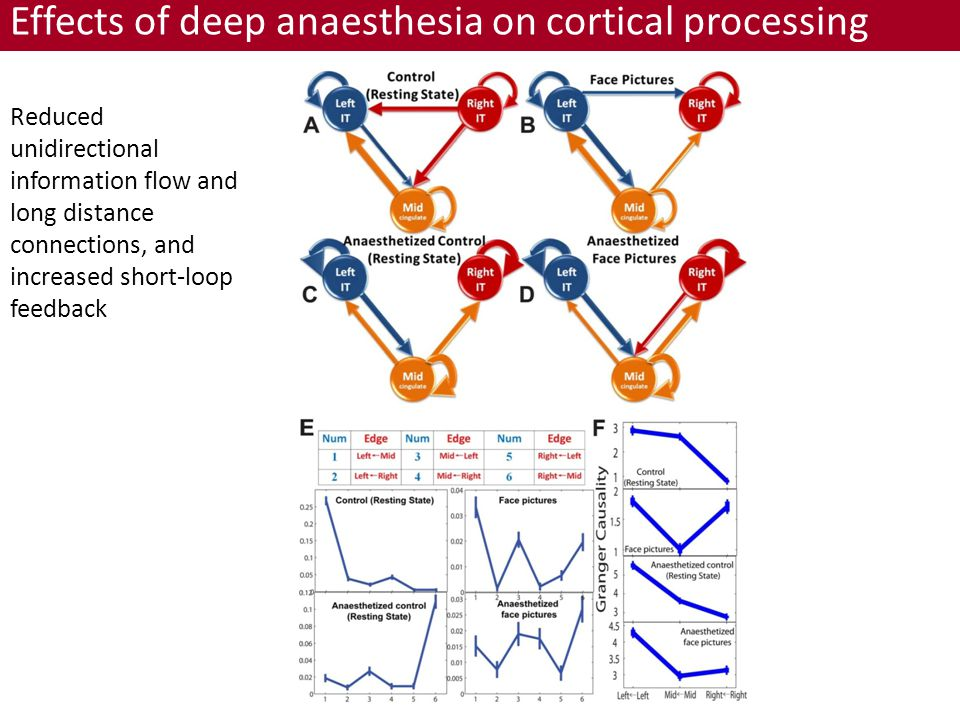 Reduced unidirectional information flow and long distance connections, and increased short-loop feedback Effects of deep anaesthesia on cortical processing