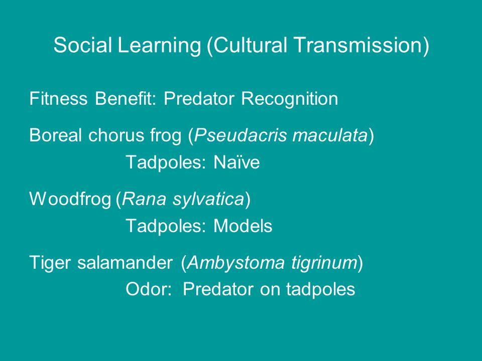 Social Learning (Cultural Transmission) Fitness Benefit: Predator Recognition Boreal chorus frog (Pseudacris maculata) Tadpoles: Naïve Woodfrog (Rana sylvatica) Tadpoles: Models Tiger salamander (Ambystoma tigrinum) Odor: Predator on tadpoles