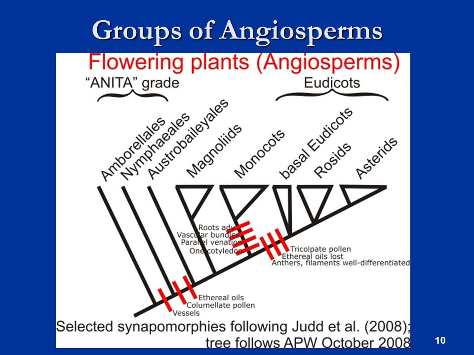 Groups of Angiosperms 10