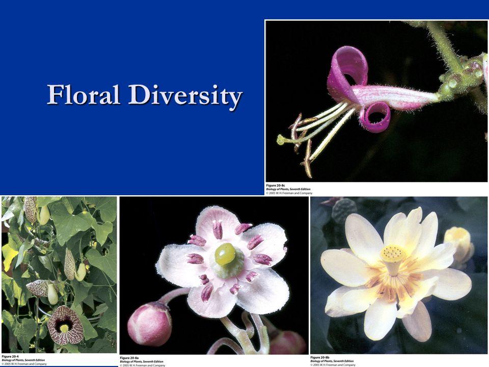 Floral Diversity 25