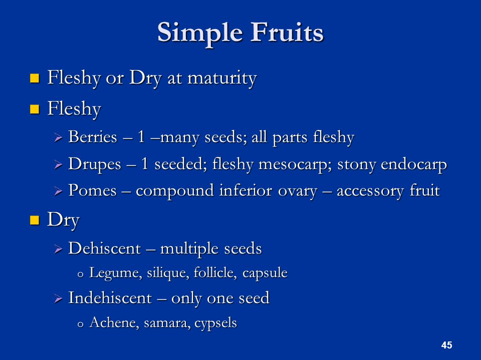 Simple Fruits Fleshy or Dry at maturity Fleshy or Dry at maturity Fleshy Fleshy  Berries – 1 –many seeds; all parts fleshy  Drupes – 1 seeded; fleshy mesocarp; stony endocarp  Pomes – compound inferior ovary – accessory fruit Dry Dry  Dehiscent – multiple seeds o Legume, silique, follicle, capsule  Indehiscent – only one seed o Achene, samara, cypsels 45