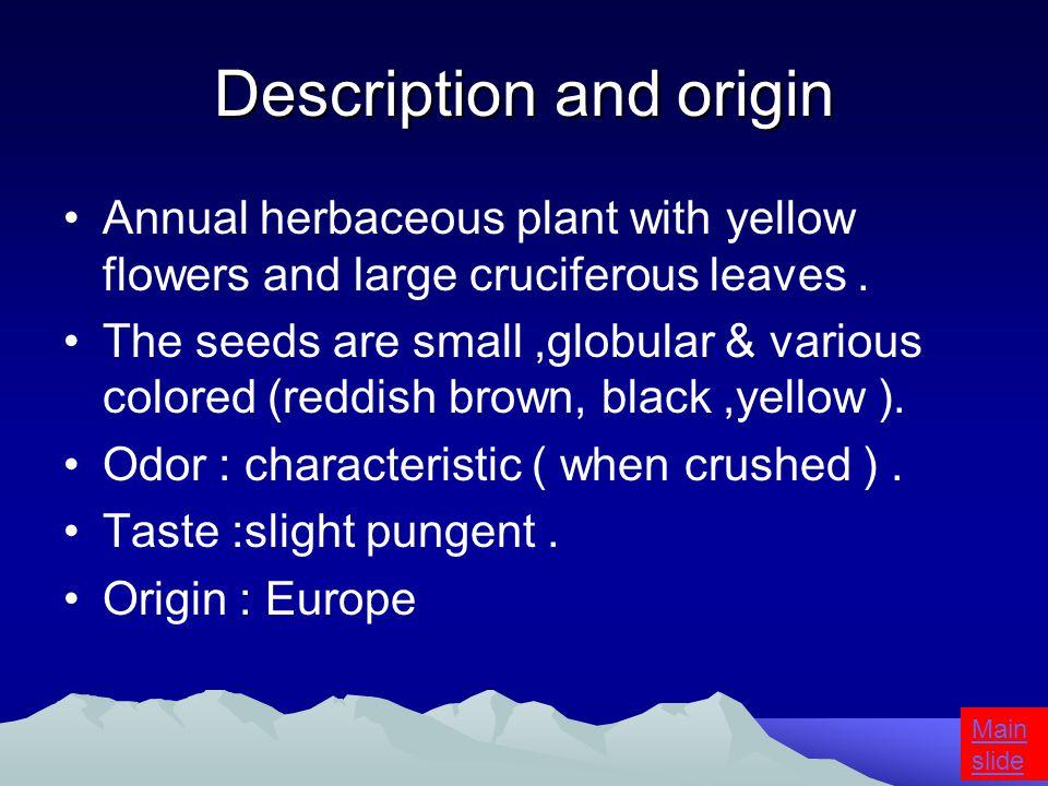 Black Mustard seeds Brassica nigra Family : Cruciferae Main slide