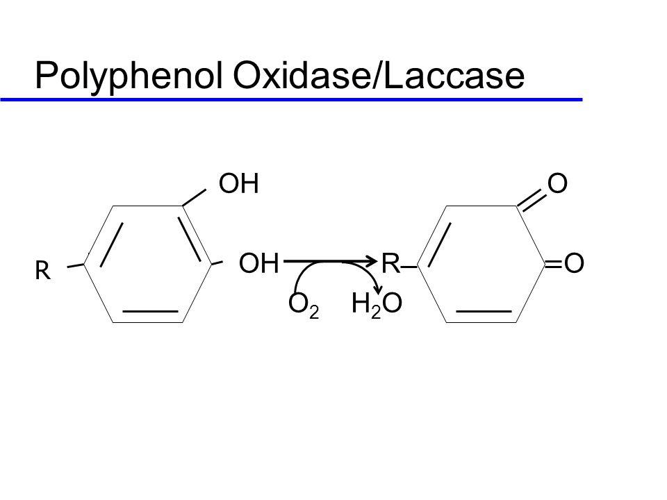 Polyphenol Oxidase/Laccase OH O R OH R O O 2 H 2 O R