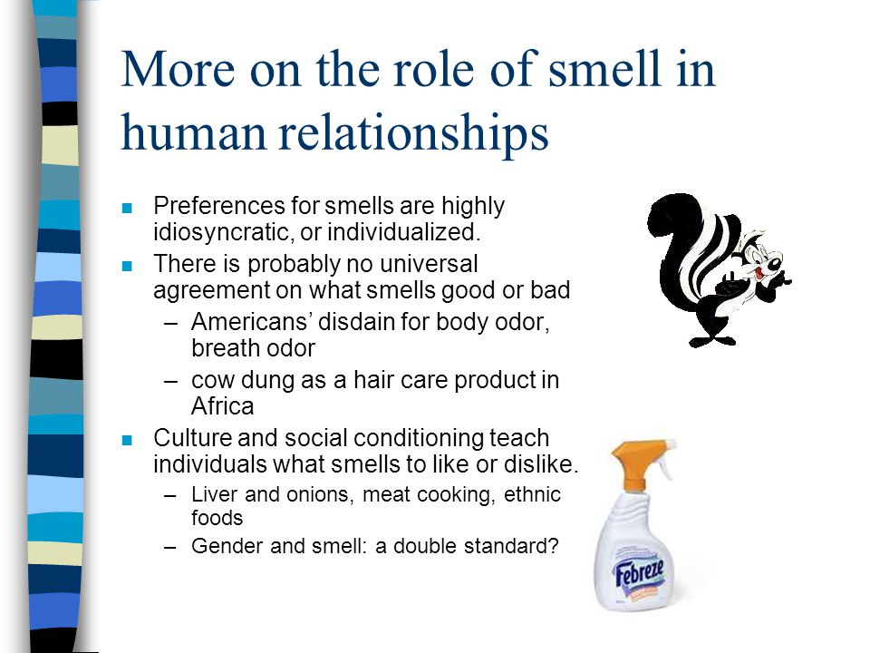 More on the role of smell in human relationships n Preferences for smells are highly idiosyncratic, or individualized. n There is probably no universa
