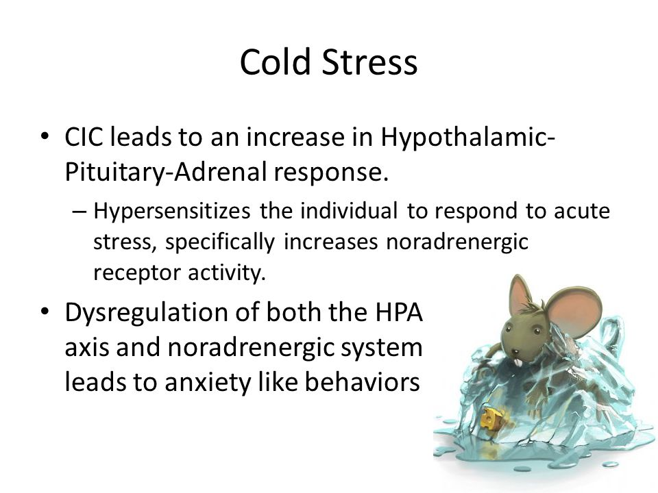 Cold Stress CIC leads to an increase in Hypothalamic- Pituitary-Adrenal response.