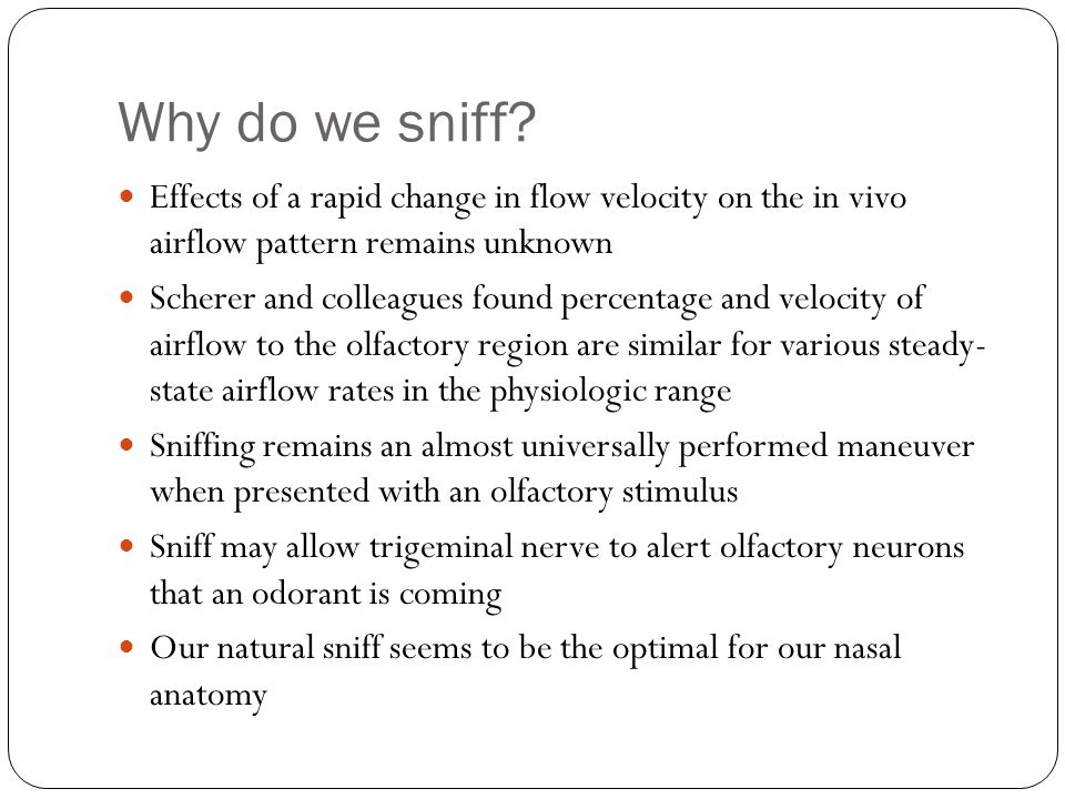 Why do we sniff? Effects of a rapid change in flow velocity on the in vivo airflow pattern remains unknown Scherer and colleagues found percentage and