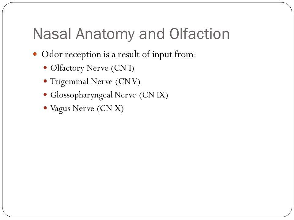 Nasal Anatomy and Olfaction Odor reception is a result of input from: Olfactory Nerve (CN I) Trigeminal Nerve (CN V) Glossopharyngeal Nerve (CN IX) Va