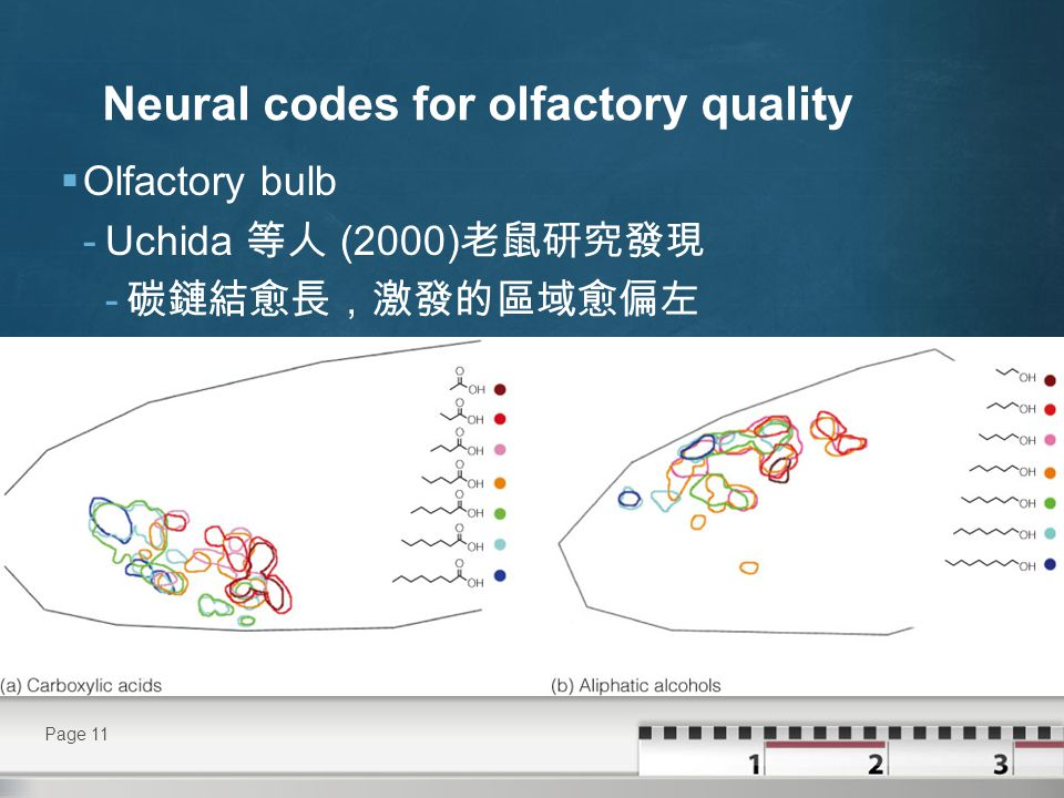 Neural codes for olfactory quality  Olfactory bulb - 嗅球反應是取決於分子與結構的特性 - hardwired response.