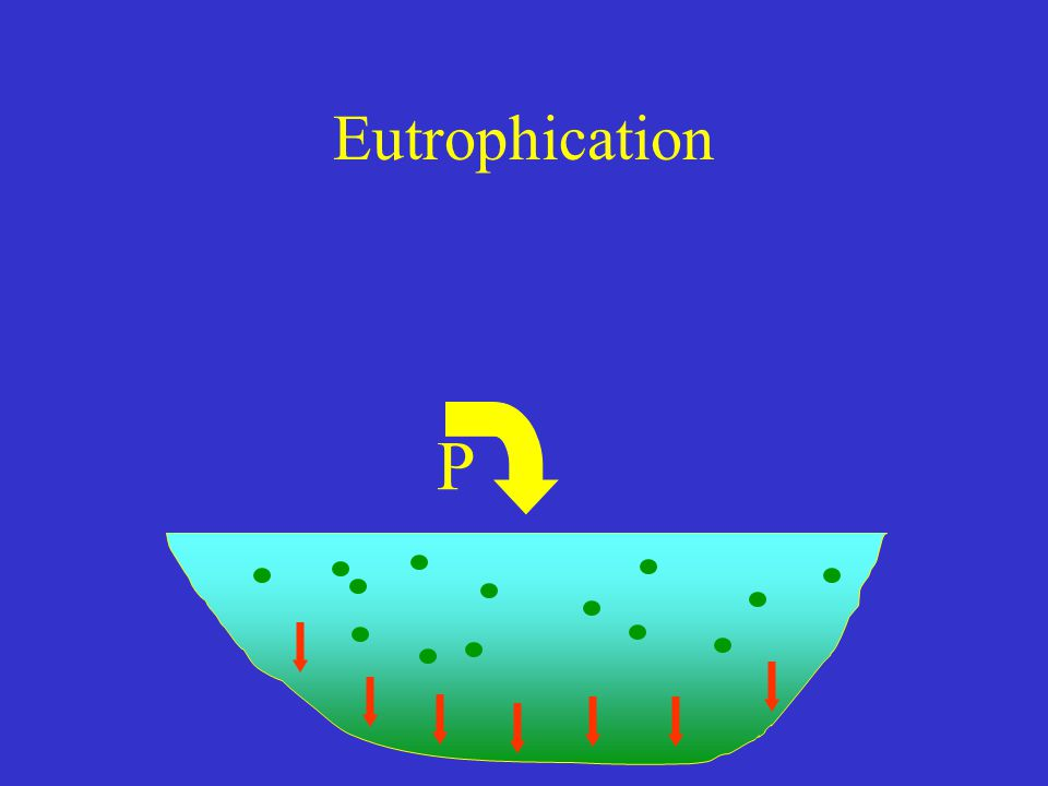 Eutrophication P