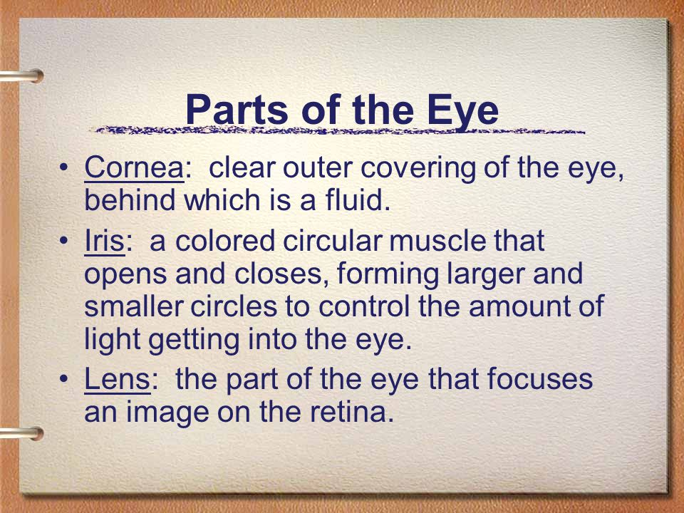 Parts of the Eye Cornea: clear outer covering of the eye, behind which is a fluid. Iris: a colored circular muscle that opens and closes, forming larg