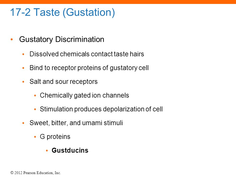 © 2012 Pearson Education, Inc. 17-2 Taste (Gustation) Gustatory Discrimination Dissolved chemicals contact taste hairs Bind to receptor proteins of gu
