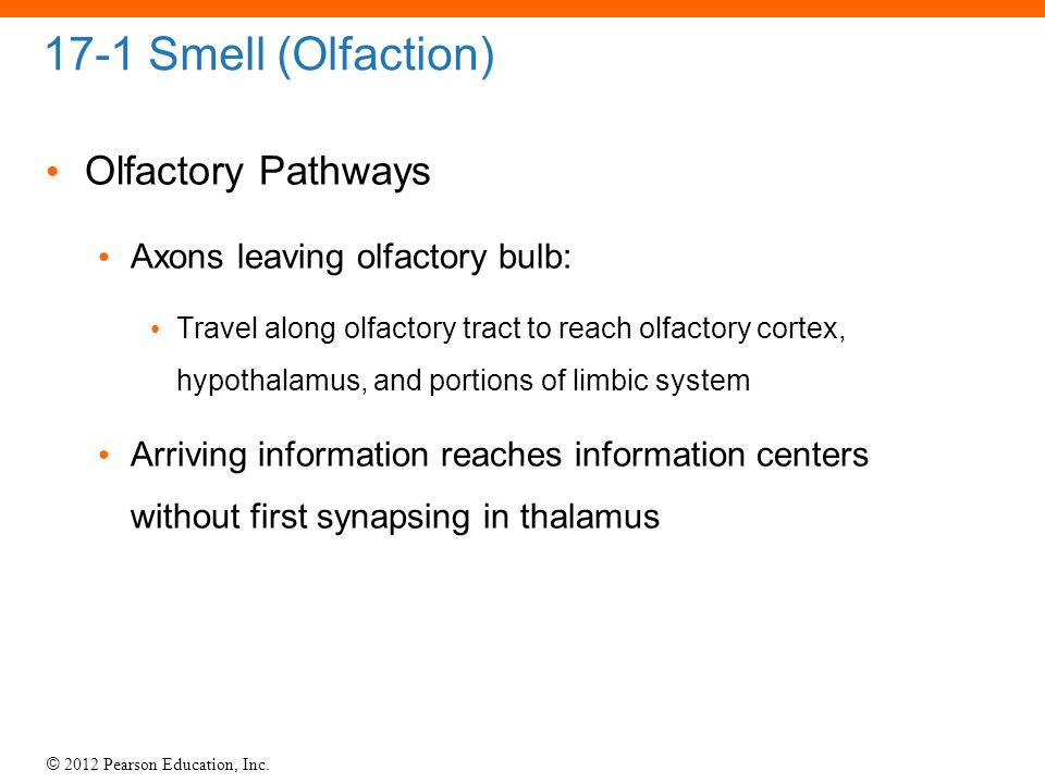 © 2012 Pearson Education, Inc. 17-1 Smell (Olfaction) Olfactory Pathways Axons leaving olfactory bulb: Travel along olfactory tract to reach olfactory