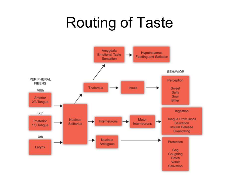 Routing of Taste