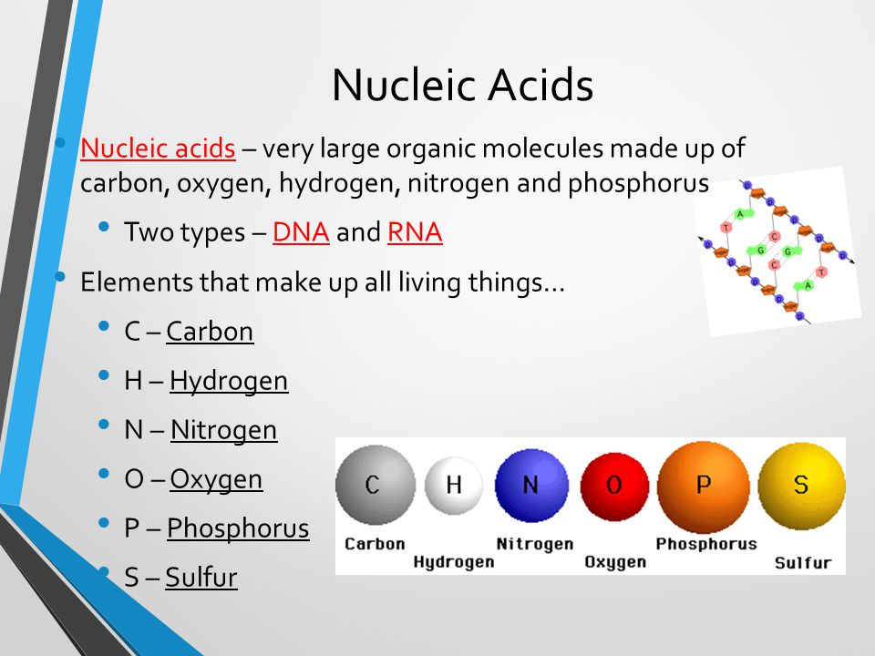 Nucleic Acids Nucleic acids – very large organic molecules made up of carbon, oxygen, hydrogen, nitrogen and phosphorus Two types – DNA and RNA Elements that make up all living things… C – Carbon H – Hydrogen N – Nitrogen O – Oxygen P – Phosphorus S – Sulfur