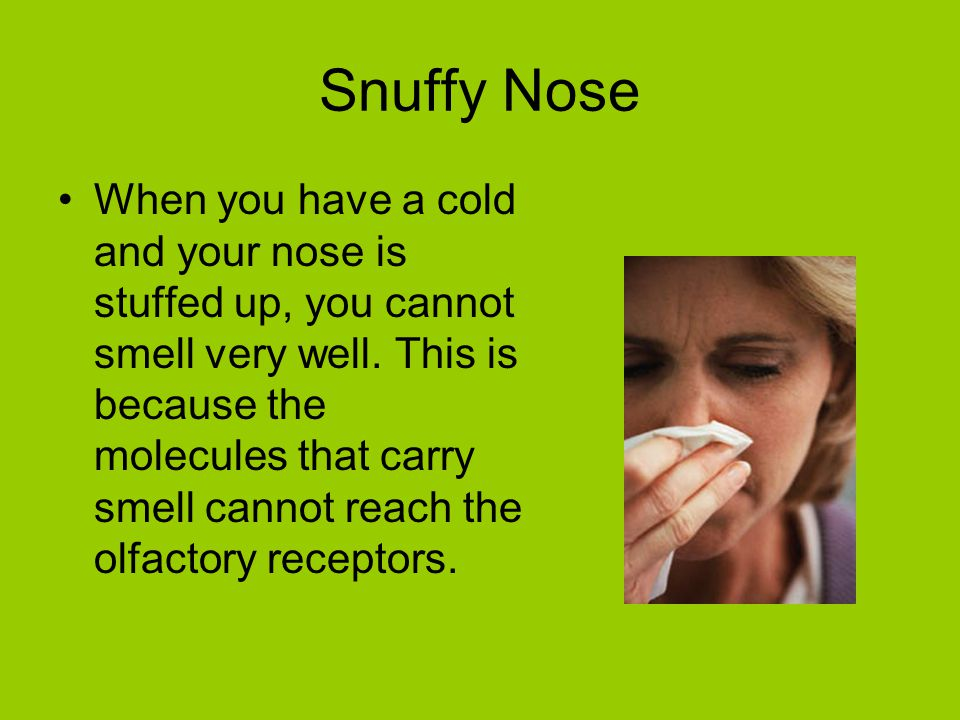 Snuffy Nose When you have a cold and your nose is stuffed up, you cannot smell very well. This is because the molecules that carry smell cannot reach