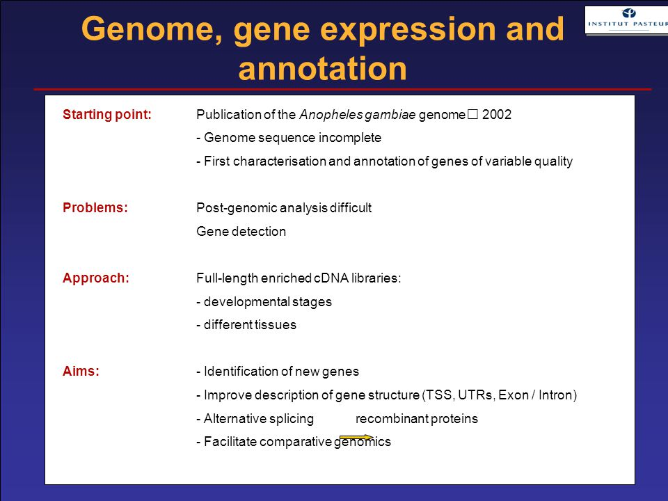 Starting point: Publication of the Anopheles gambiae genome 2002 - Genome sequence incomplete - First characterisation and annotation of genes of variable quality Problems:Post-genomic analysis difficult Gene detection Approach:Full-length enriched cDNA libraries: - developmental stages - different tissues Aims:- Identification of new genes - Improve description of gene structure (TSS, UTRs, Exon / Intron) - Alternative splicing recombinant proteins - Facilitate comparative genomics Genome, gene expression and annotation