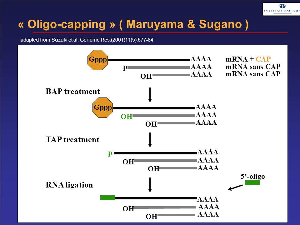 AAAA Gppp p OH mRNA + CAP mRNA sans CAP AAAA Gppp OH AAAA p OH AAAA OH BAP treatment TAP treatment RNA ligation 5'-oligo « Oligo-capping » ( Maruyama