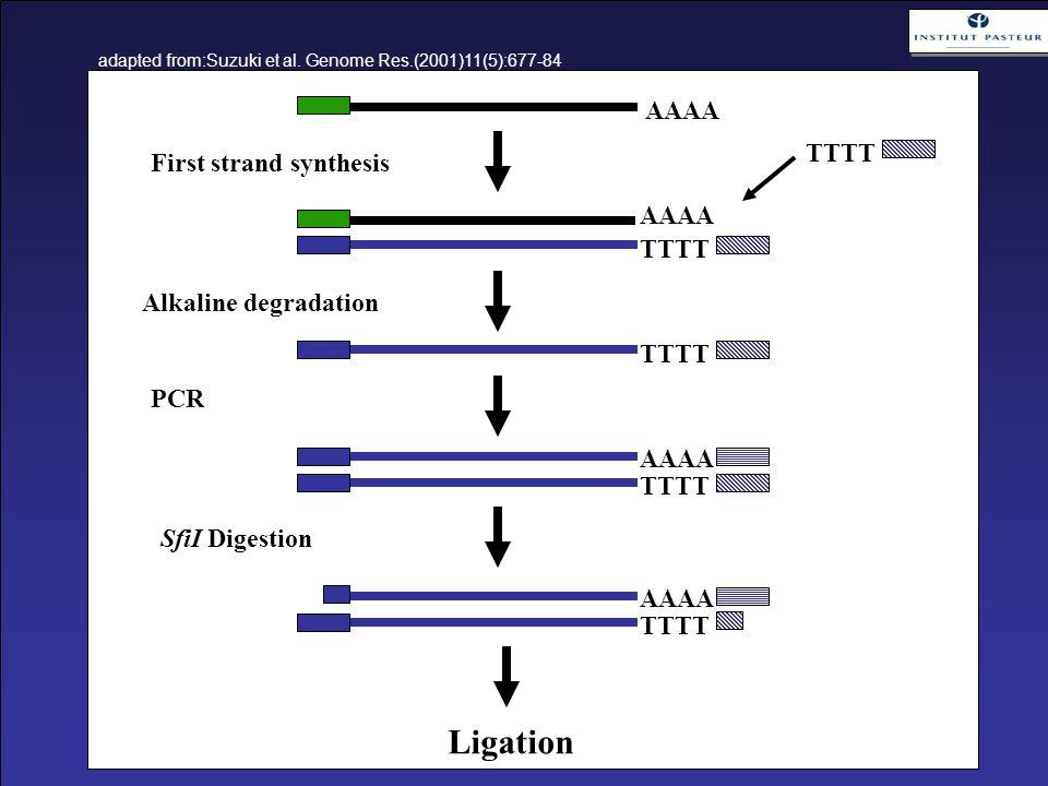 AAAA TTTT AAAA TTTT AAAA Ligation First strand synthesis Alkaline degradation PCR SfiI Digestion TTTT AAAA adapted from:Suzuki et al. Genome Res.(2001