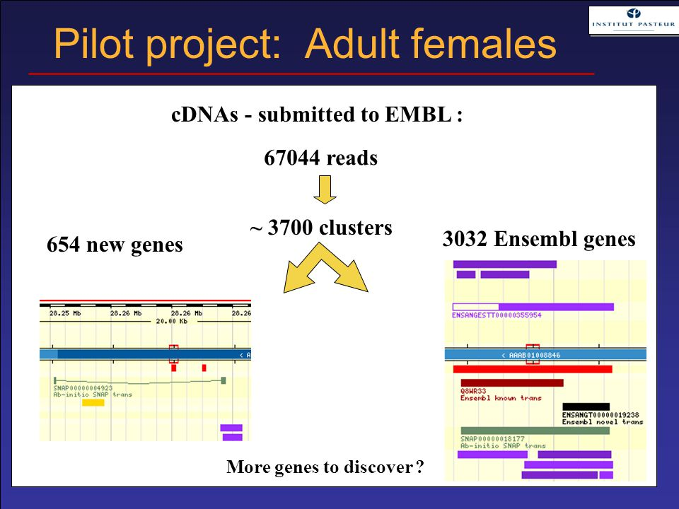 More genes to discover ? 67044 reads ~ 3700 clusters 85 % improved cDNAs - submitted to EMBL : 654 new genes Pilot project: Adult females 3032 Ensembl
