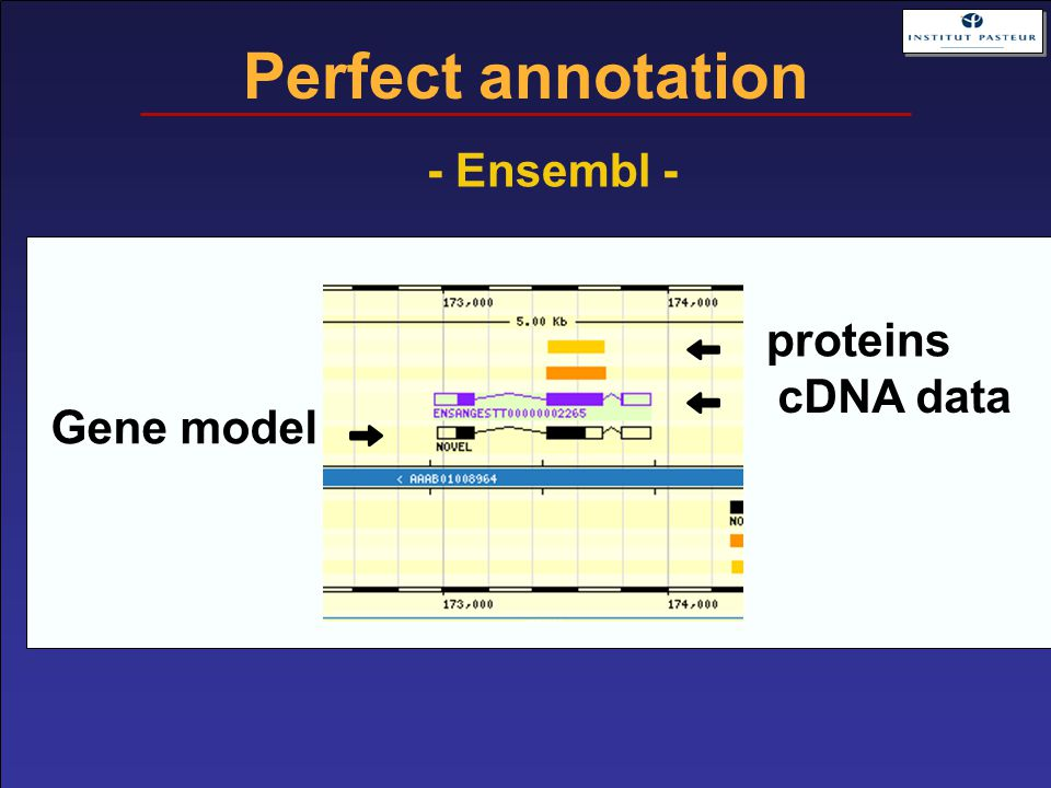Perfect annotation Gene model cDNA data proteins - Ensembl -
