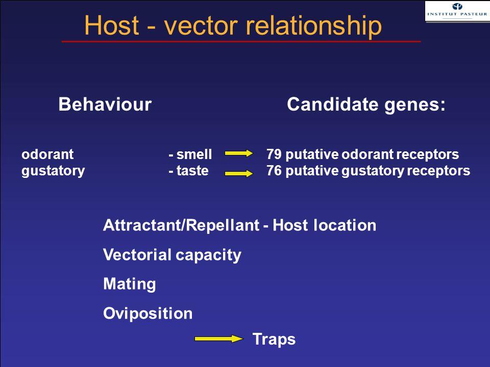 BehaviourCandidate genes: odorant - smell79 putative odorant receptors gustatory- taste76 putative gustatory receptors Attractant/Repellant - Host loc